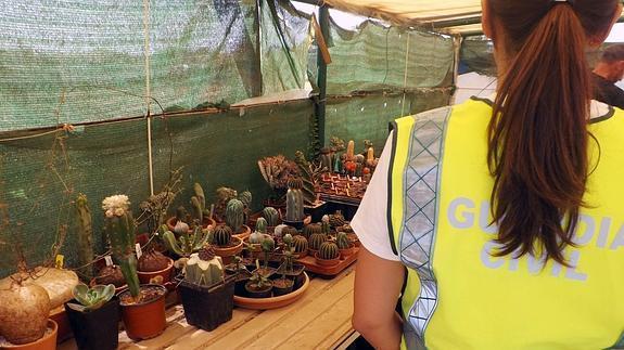 cactus--575x323