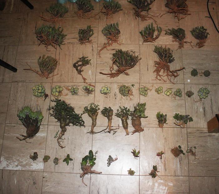 stolen-succulents